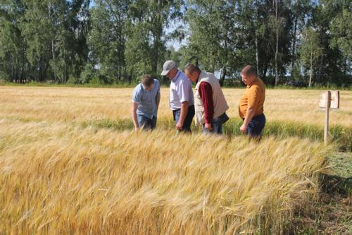 Уборке зерновых культур и рапса – особое внимание