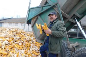 Сила кукурузных зерен