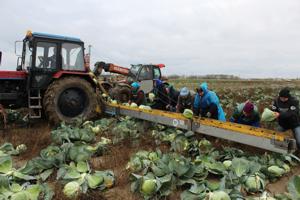Культура земледелия на высоком уровне